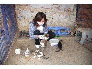 Kuşadası Hayvan Rehabilitasyon Merkezi'nde 18 ayda 3115 hayvan misafir edildi