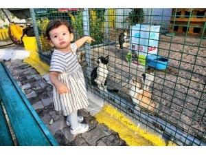 Aksaray'daki hayvan barınağında kedilere özel alan oluşturuldu