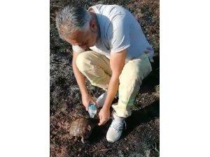 Alevlerin arasından kurtarılan kaplumbağaya can suyu