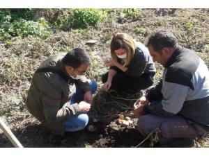Patates tarlalarında hastalık ve zararlılarla ilgili çalışma yapıldı