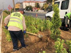 Orta refüjler temizlenip ağaçlandırılıyor