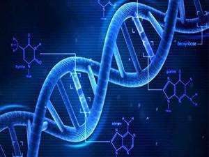 Tüm DNA'nız deşifre edilebilir