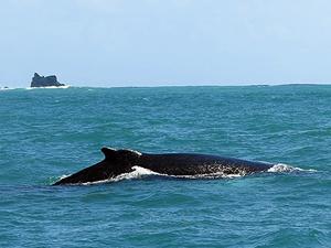 Japonya'nın balina avını durdurması istendi