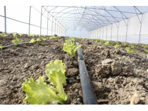 Büyükşehir destekli seralarda üretim devam ediyor