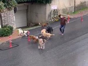 İstanbul'da başıboş köpeklerin mahalleliye korku yaşattığı anlar kamerada