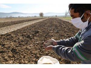 Menteşe Belediyesi hayvan yetiştiricisi için yem bitkisi üretiyor