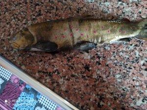 Soğuk havada hasta annesi için balık avına çıktı