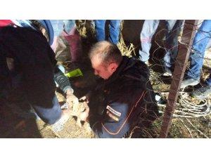 Burdur'da sondaj kuyusuna düşen yavru köpek kurtarıldı