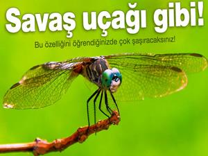Meyve sinekleri savaş uçağı gibi