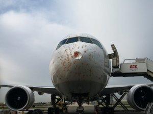 Kuş sürüsüne giren THY'nin kargo uçağı geri döndü