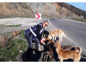 Samsun polisi sokak hayvanlarını unutmadı