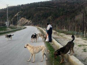 Türkeli'de sokağa çıkma kısıtlamasında sokak hayvanları unutulmadı