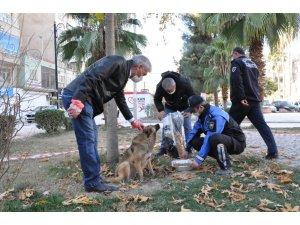Kızıltepe'de sokak hayvanlarının sağlık kontrolleri yapılıyor