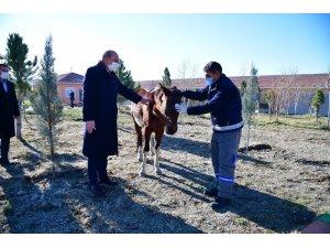 Sahibinden kaçan atın yolu, Mamak Belediyesi Barınağı'na düştü