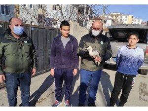 Van'da bitkin halede bulunan Bahri kuşu tedavi altına alındı