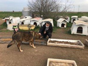 Kaymakam Taşçı ve Başsavcı Yiğiter, sokak hayvanlarını unutmadı
