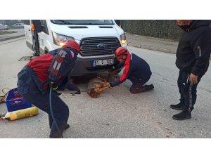 Servis minibüsünün çarparak altına sıkıştırdığı köpeği itfaiye kurtardı