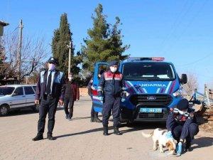 Jandarmadan sokak hayvanlarına şefkat eli