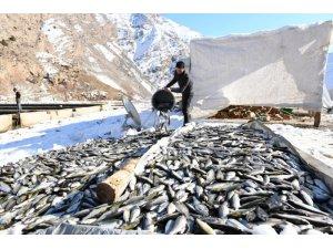 Çatak'da oksijensiz kalan 12 ton alabalık telef oldu