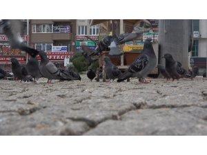 Kısıtlamada sokaklar hayvanlara kaldı