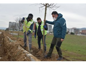 Güzelhisar Caddesi'nde 400 ağaç toprakla buluştu