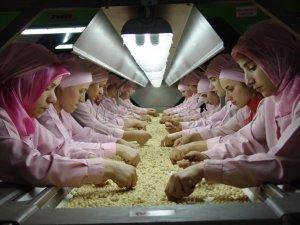 Düzce'den Avrupa'ya 1.3 milyon kilogram fındık ihraç edildi