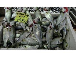 Çanakkale'de balık fiyatları el yakıyor