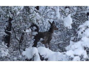 En şanslı geyikler...Üniversite bakıyor, milli parklar besliyor