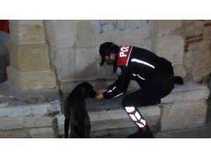 Polis ekipleri, eksi 10 derecede sokak hayvanlarını unutmadı