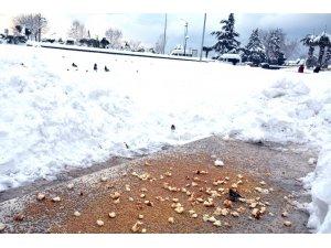 Kdz. Ereğli Belediyesi 75 noktada besleme çalışması yaptı