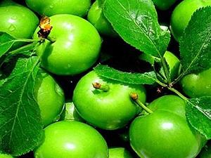 Yeşil erik vücuda faydaları