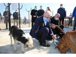 Akdeniz Belediyesi, Adanalıoğlu'nda sokak hayvanları için korunaklı alan yaptı