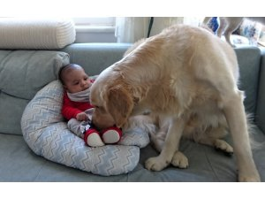 Köpek yeni doğan bebeği kimseyle paylaşmıyor