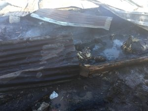 Artvin'de ahır yangınında 27 küçükbaş hayvan telef oldu