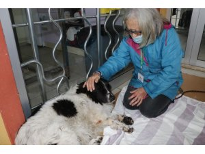 Köpeğinin sopayla dövüldüğünü iddia etti