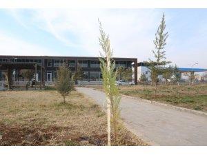 Bismil Devlet Hastanesi bahçesine 600 fidan dikildi