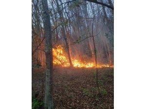Sinop'ta orman yangını