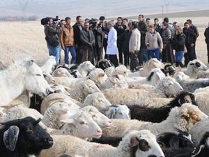 Diplomalı çobanlar sertifikalarını aldı