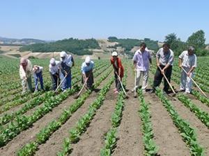Bakanlıktan çiftçiye müjdeli haber