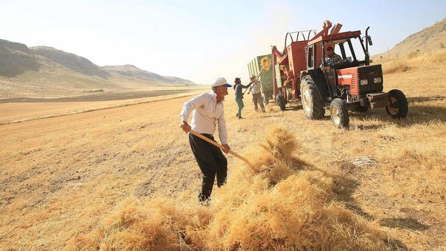 Buğday ithalatında dünya rekoru kırdık