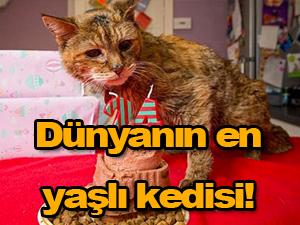 Dünyanın en yaşlı kedisi!