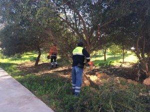 Didim'de yeşil alan çalışmaları devam ediyor