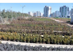 Kayapınar Belediyesi, mevsimlik çiçek ve meyve fidanlarını kendi üretiyor