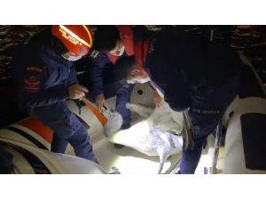 İzmir'de yaralı pelikan, Sahil Güvenlik tarafından kurtarıldı