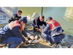 Kaçak balık avcılarına geçit yok