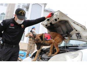 """Jandarmanın hassas burunları """"Şila"""" ve """"Vera"""""""