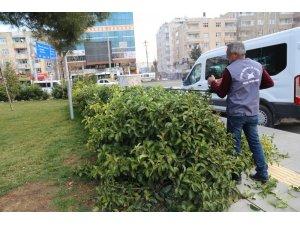 Mardin Büyükşehir Belediyesinden budama çalışmaları