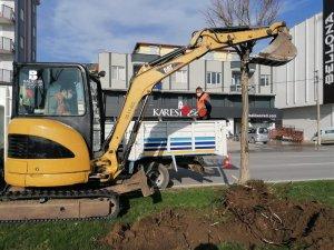 Rüzgar Caddesi'ndeki ağaçlar yenilenecek