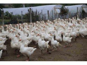 Hilmi Güler'in tarım projeleri ikiye katladı
