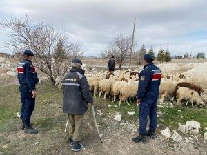 Kayıp koyunları jandarma ekipleri drone ile buldu
